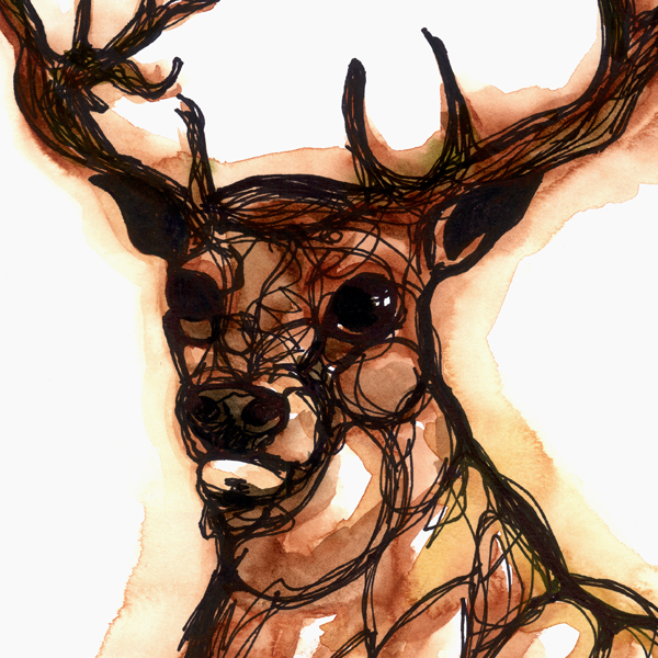 Elk watercolour + ink illustration